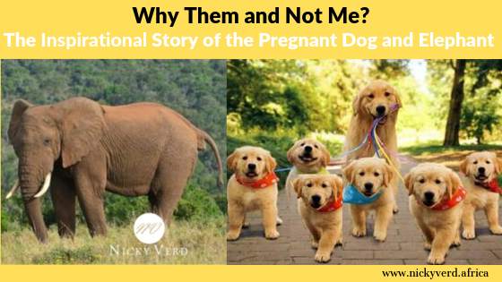 Why Them and Not Me? The Inspirational Story of the Pregnant Dog and the Elephant